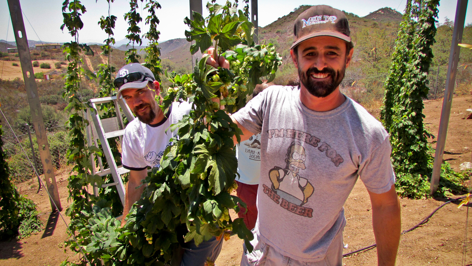 2014 Hop Picking