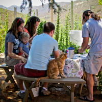 HOP PICKING & BBQ EVENT