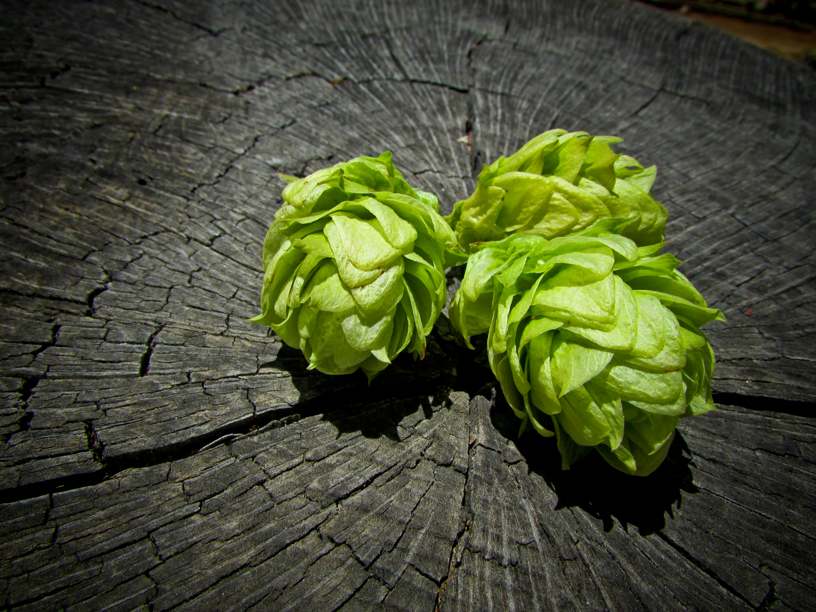 Our Hops